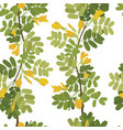 blossom acacia yellow flowers seamless pattern vector image