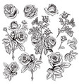 collection of hand drawn roses for design vector image vector image