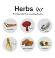 herbs sexual dysfunction vector image vector image