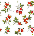 rosehip seamless pattern for tea graphic vector image vector image