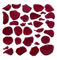 set of burgundy rose petals vector image