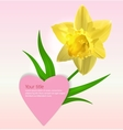 Valentines background with Narcissus flower vector image vector image