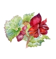 Watercolor red flowers texture vector image