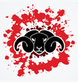 angry black sheep face head with big horn vector image vector image
