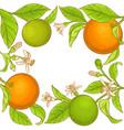 orange branch frame vector image vector image