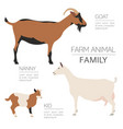 Goat farming infographic template animall family