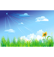 grass on a background of blue sky vector image vector image