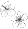 hibiscus floral tropical flowers black and vector image vector image