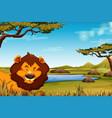 lion in african landscape scene vector image