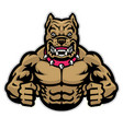 angry muscle pitbull vector image vector image