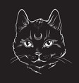 gothic black cat with moon on his forehead vector image