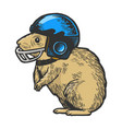 hamster in football helmet engraving vector image