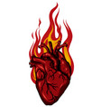 burning heart for design vector image