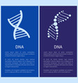 dna set white spirals isolated on blue backdrop vector image vector image