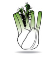 Freehand drawing fennel icon vector image vector image