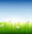 Green grass with flowers vector image vector image