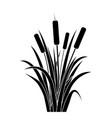 Silhouette black water reed plant cattails leaf
