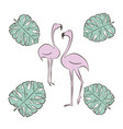 flamingo pink bird with monstera leaf set vector image