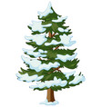 pine tree with snow on it vector image vector image