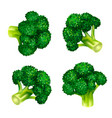 green broccoli icon set isometric style vector image vector image