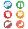 human internal organ icon body parts symbol vector image