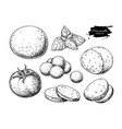 mozzarella cheese drawing hand drawn round vector image
