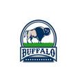 American Bison Buffallo Banner Circle Woodcut vector image vector image