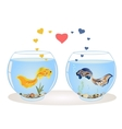 Couple of fish in love vector image vector image