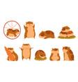 cute cartoon hamster characters set funny animal vector image vector image