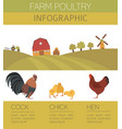 poultry farming chicken family isolated on white vector image vector image