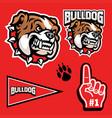 set sporty angry bulldog mascot head vector image vector image