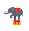 Circus elephant icon vector image