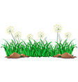 isolated grass on white background vector image
