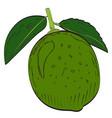 isolated lemon vector image vector image