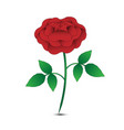 isolated red rose on white background vector image