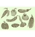 Collection of hand-drawn vegetables vector image