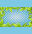 green leaves frame on transparent background vector image