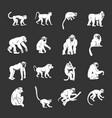 monkey types icons set grey vector image vector image