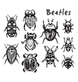 Set of hand drawn ink bugs beetles vector image