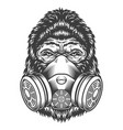 vintage monochrome gorilla head vector image
