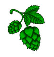 branch beer hop in engraving style design vector image vector image