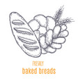 hand drawn decorative bread bakery vector image vector image