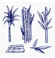 hand drawn sugar cane set vector image vector image