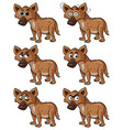 hyena with different facial expressions vector image vector image