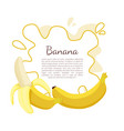 banana exotic juicy ripe yellow fruit berry icon vector image