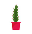 cactus pot icon flat style vector image