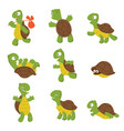 cartoon turtle cute tortoise wild animal vector image