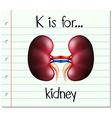 Flashcard letter K is for kidney vector image