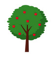 fruit apple tree agriculture nature botanical vector image