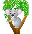 Koala cartoon vector image